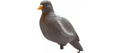 Підсадний голуб Birdland